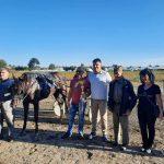 KONJSKE TRKE U LOZOVIKU: Nadmetalo se 56 konja, šampion dana je Gracieuse Bricoise